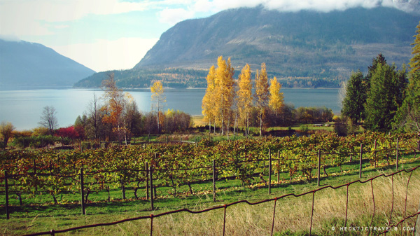 Vineyard on Upper Arrow Lake