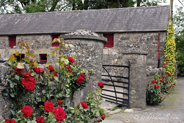 An Irish Rose Garden