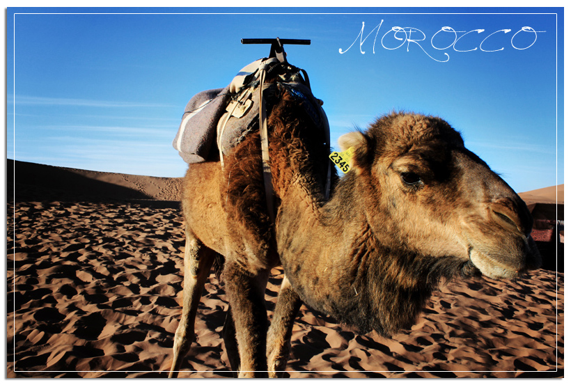 Farty the Camel