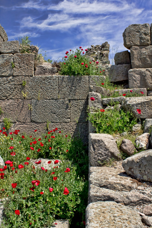 Flowers in Pergamon
