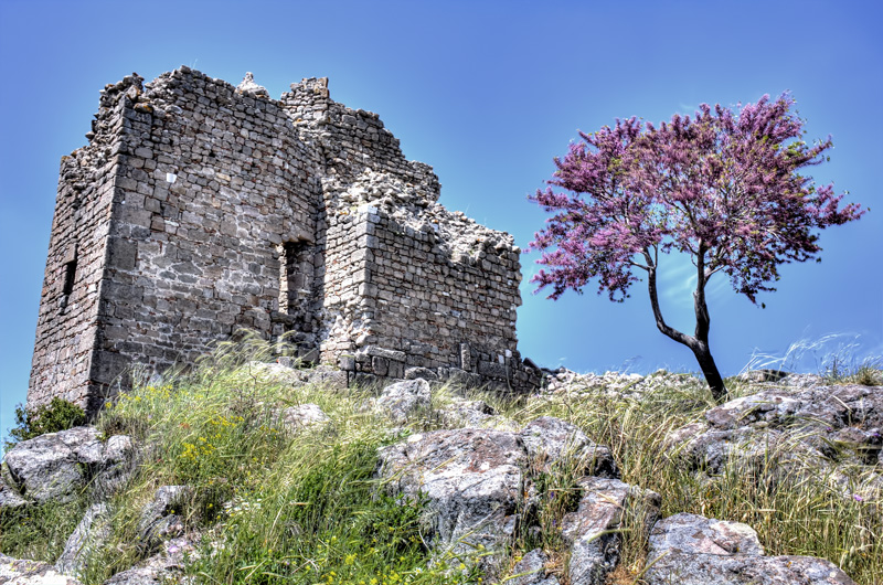 Purple tree, Pergamon
