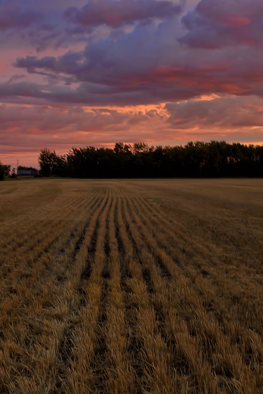 Alberta Sunset-2_533x800