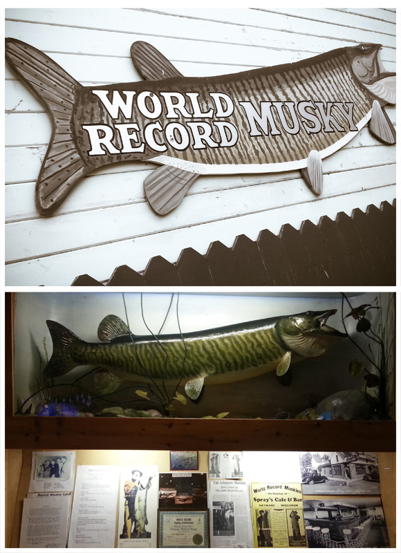World Record Musky