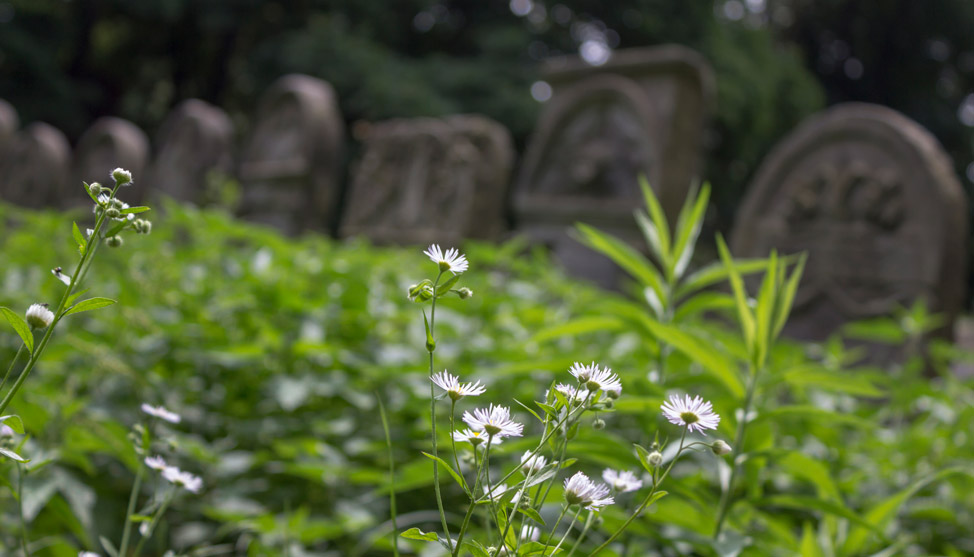 The Jewish Cemetery in Warsaw thumbnail