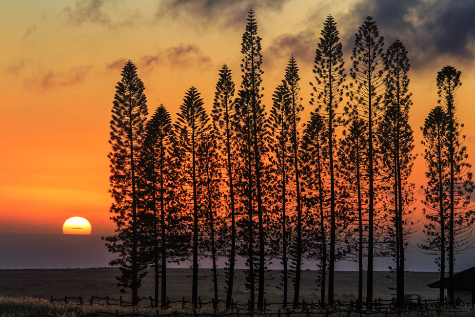 Lanai Sunset Pines