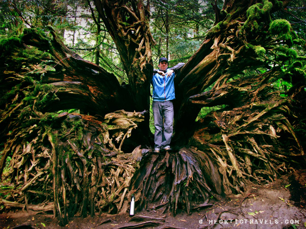 Vancouver Island - Cathedral Grove 2