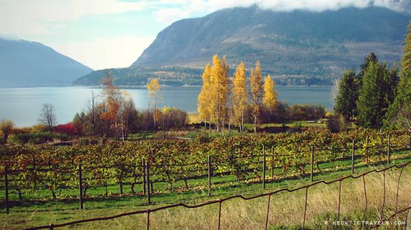 Vineyard on Upper Arrow Lake