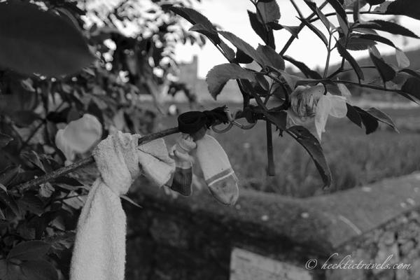 Wish Tree Socks