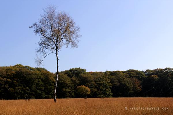 Hoge Veluwe Landscape