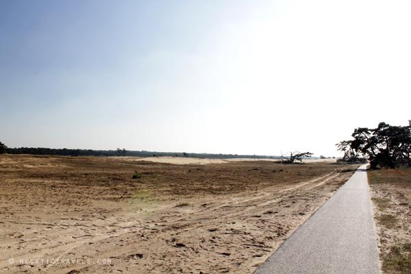 Hoge Veluwe Landscape 2