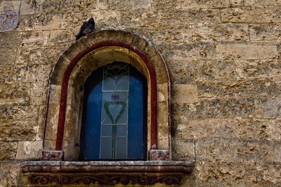Lone Pigeon - Bodrum, Turkey