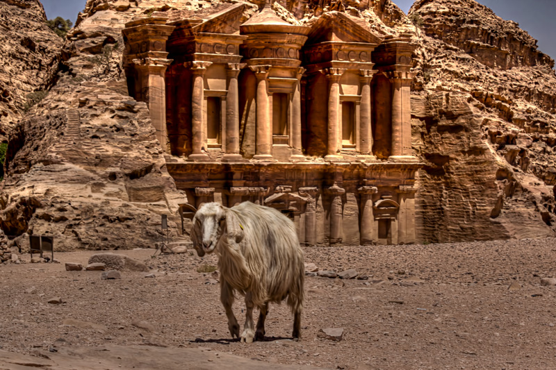 Goat at the Monastery, Petra