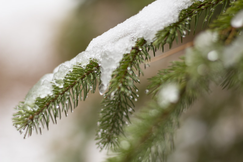 Snow Clings on
