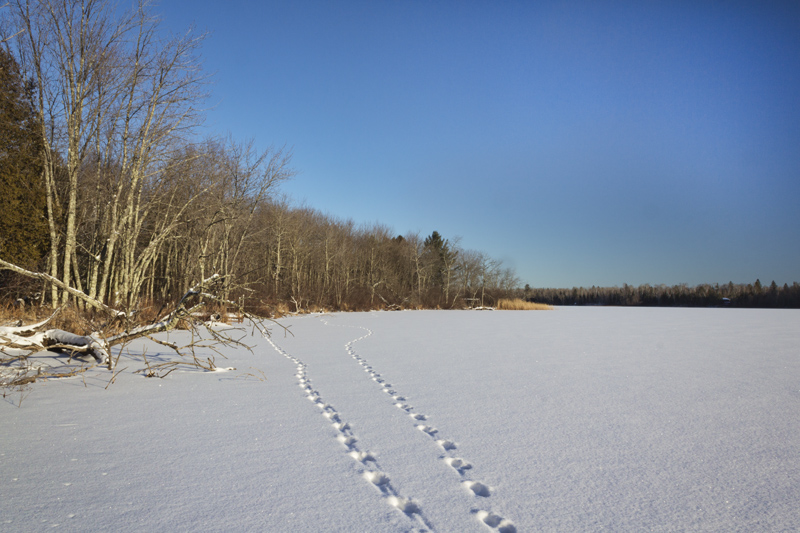 Tracks Across the Lake