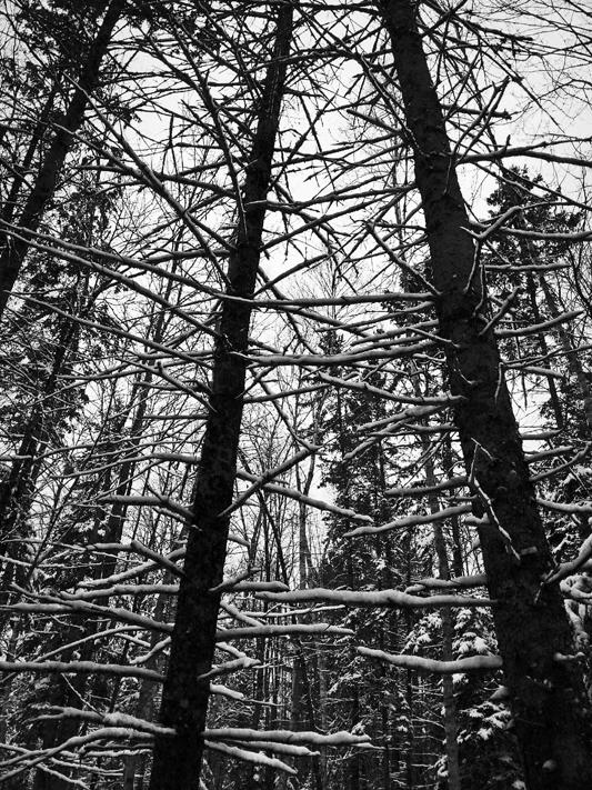 Snow Ladders