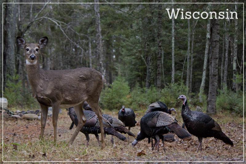 Wisconsin Postcards-002