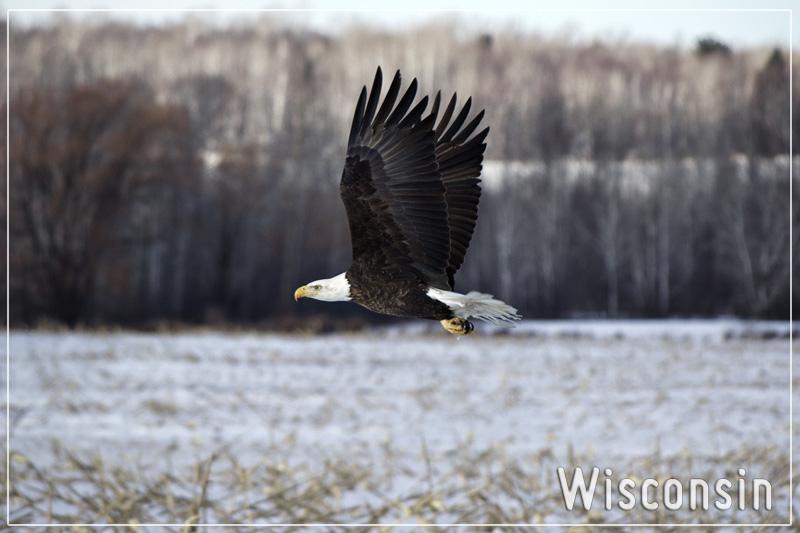 Wisconsin Postcards-005