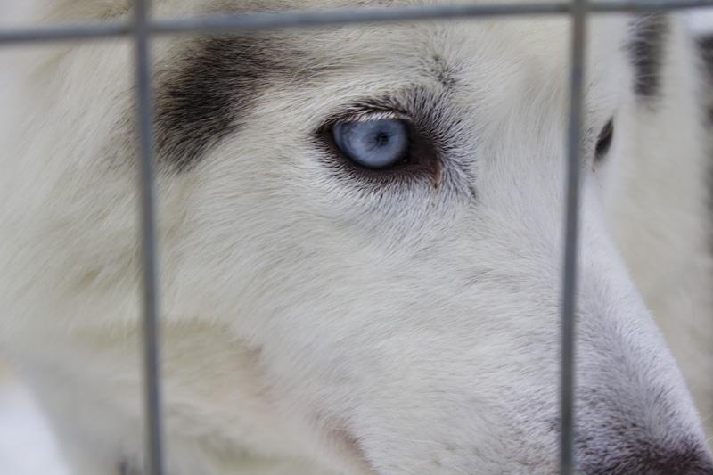 Finland Dogsledding-003