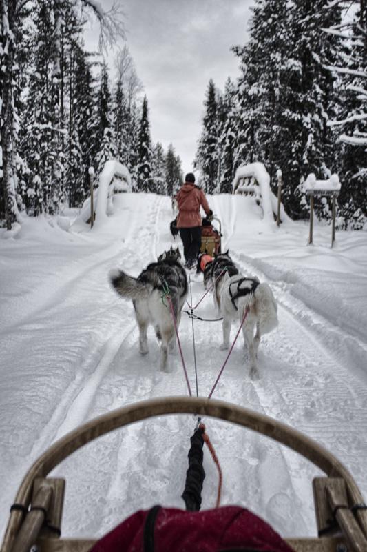 Finland Dogsledding-011