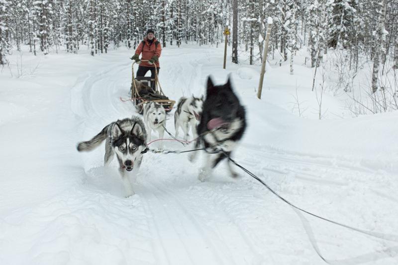 Finland Dogsledding-014
