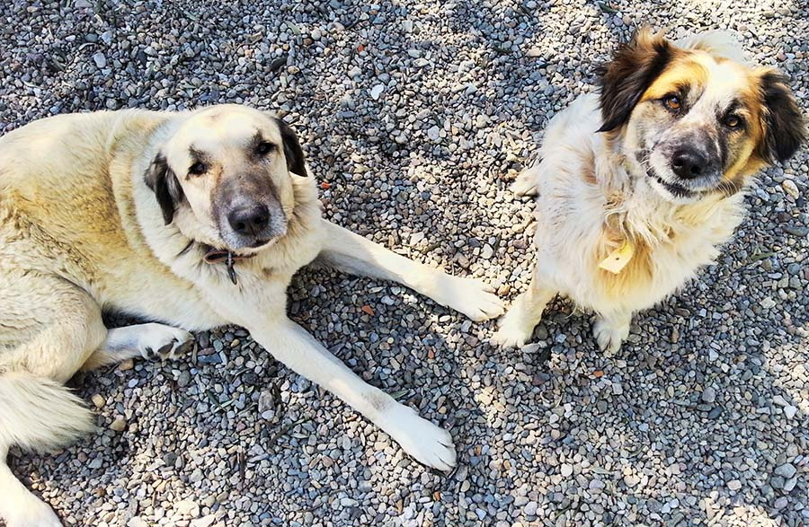 Juno with Zak