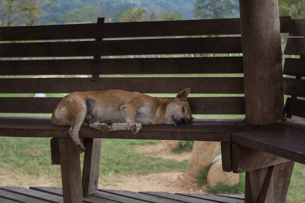 ENP-rescue-dog