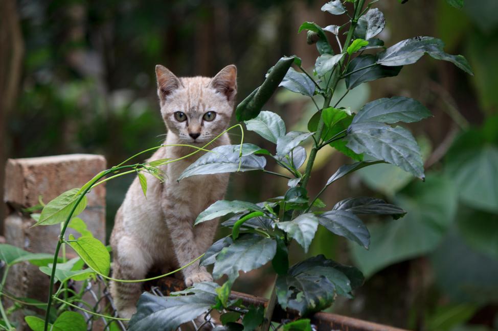 ENP-rescue-kitty