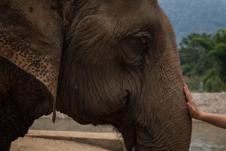 Elephant Nature Park - Touch