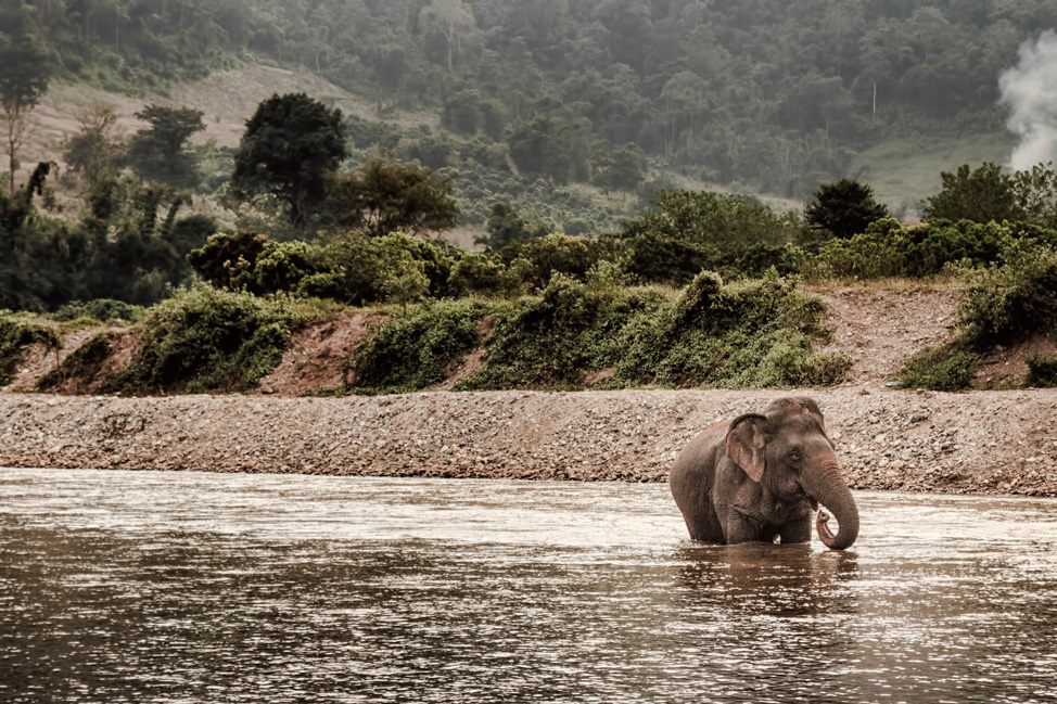 Elephant Nature Park in Photos - Hecktic Travels