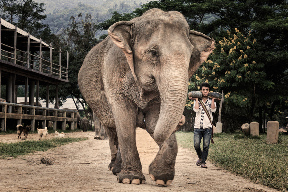 Ele and the Mahout