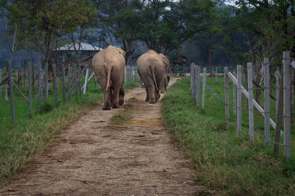 Elephant Butts