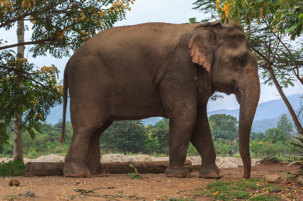 Elephant-in-Nature