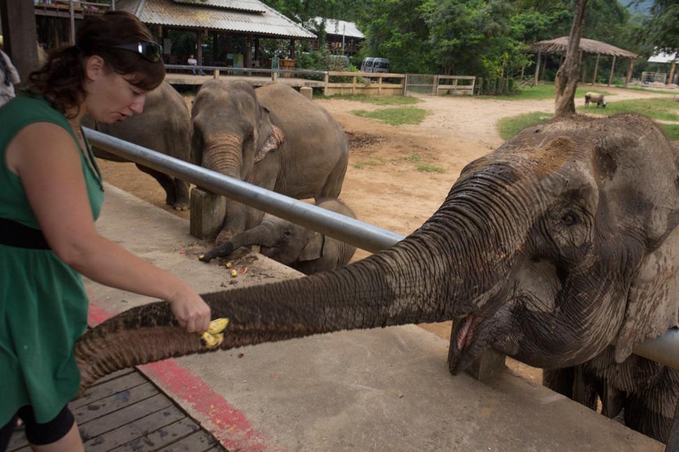 Feeding-Elephants