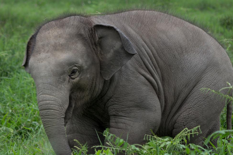 Fuzzy-baby-elephant