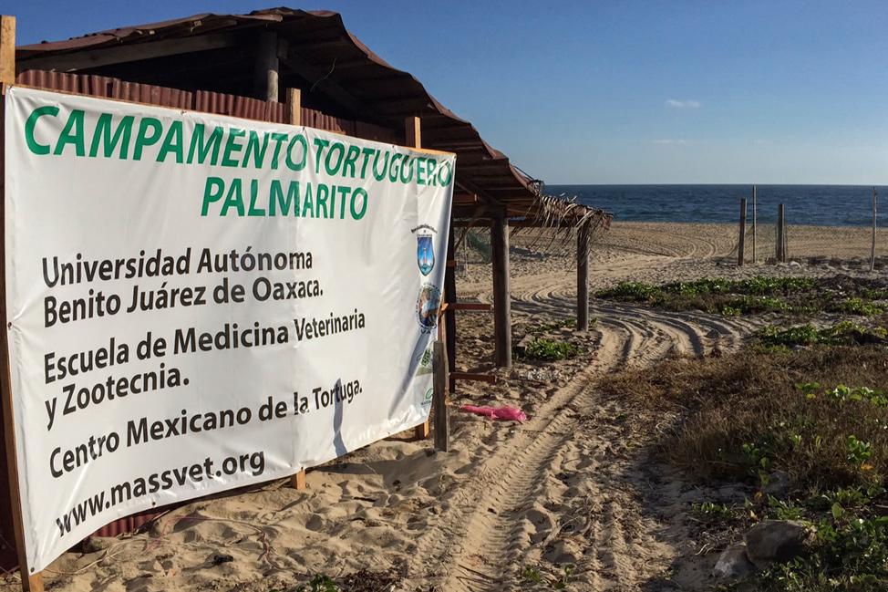 Turtle Sanctuary Puerto Escondido