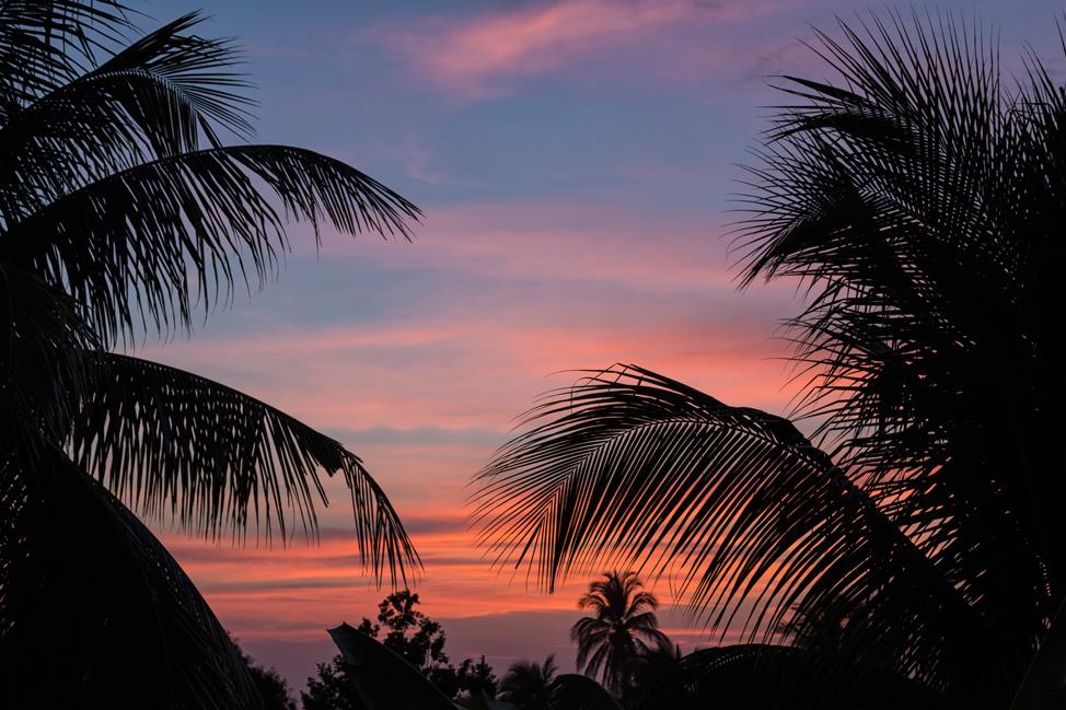 Palm-Tree-Sunset