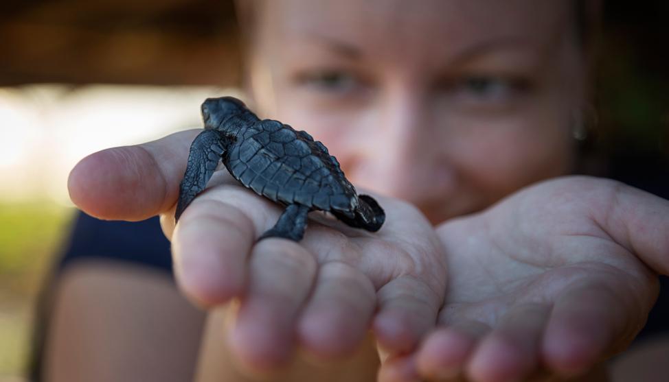 Turtles Turtles Turtles thumbnail