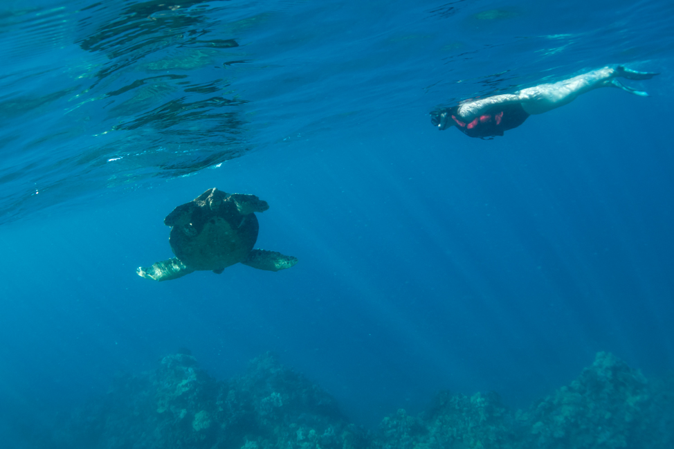 Swimming-with-turtles-Maui