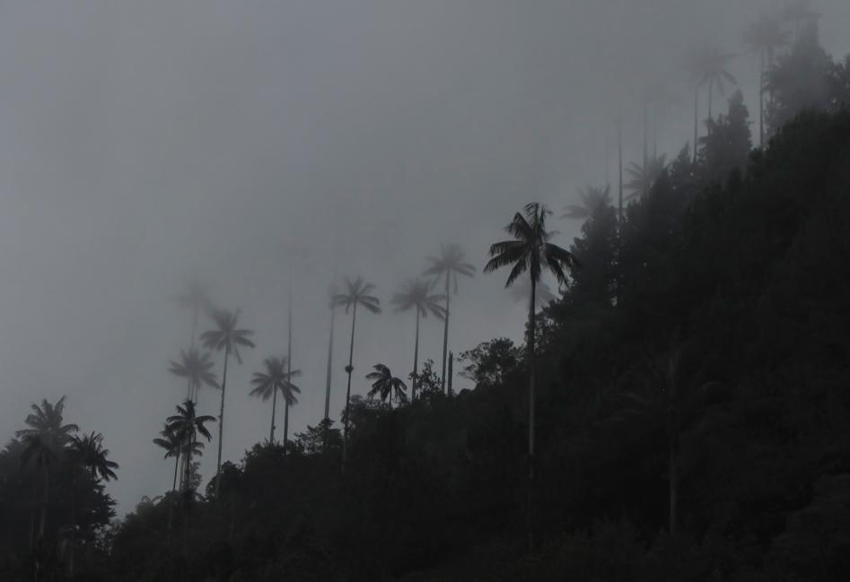 Salento Forest