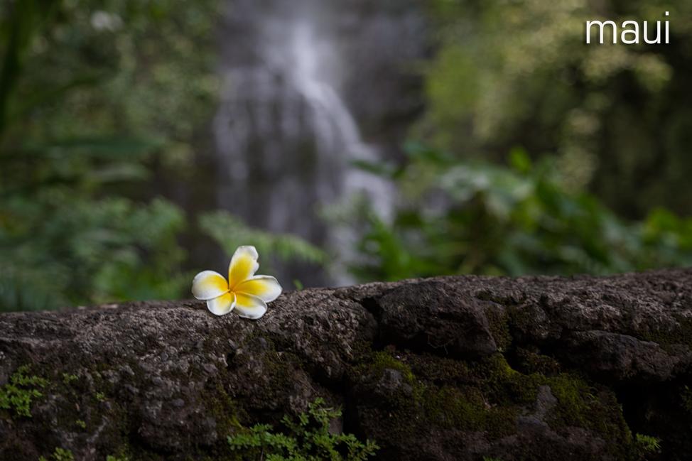 Maui Flower