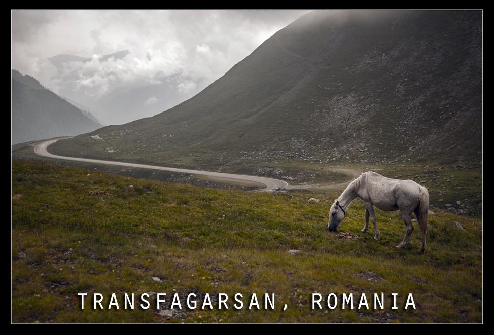 Transfagarasan Horse