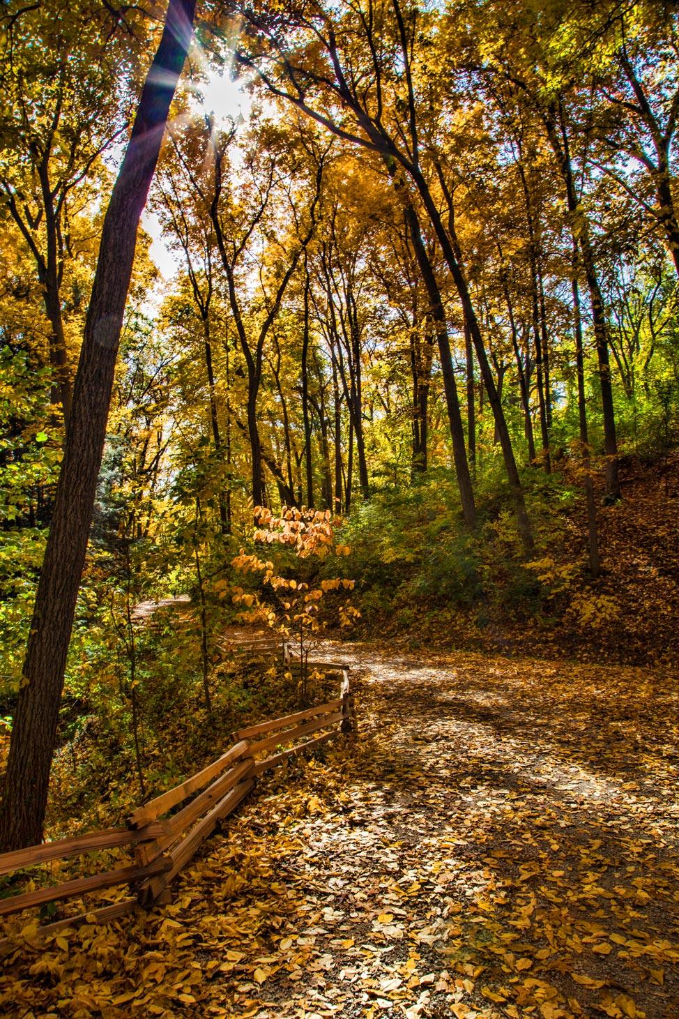 Nichols Arboretum Path