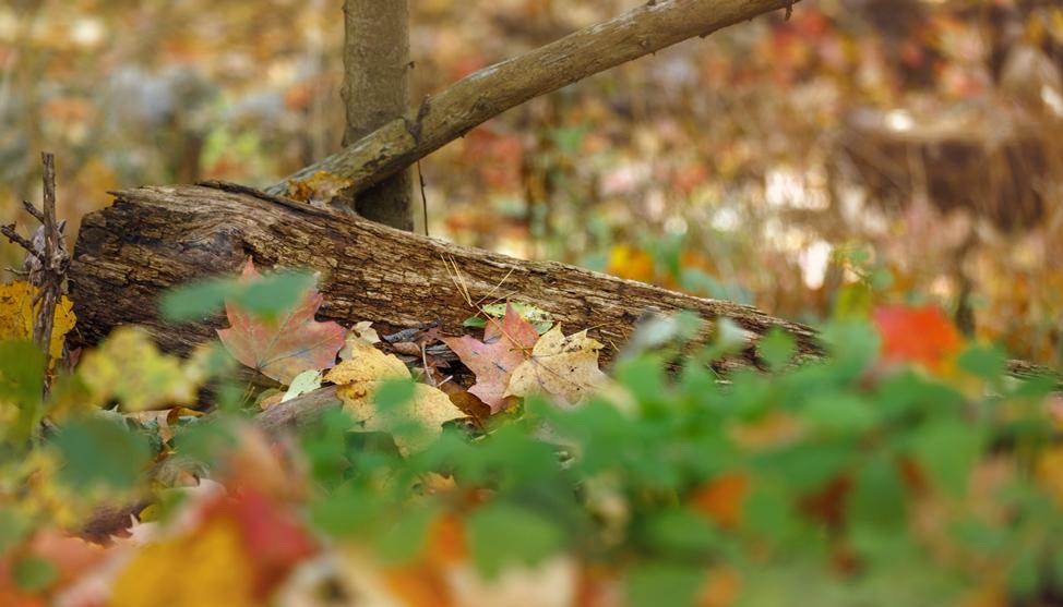 Ann Arbor Fall THUMBNAIL