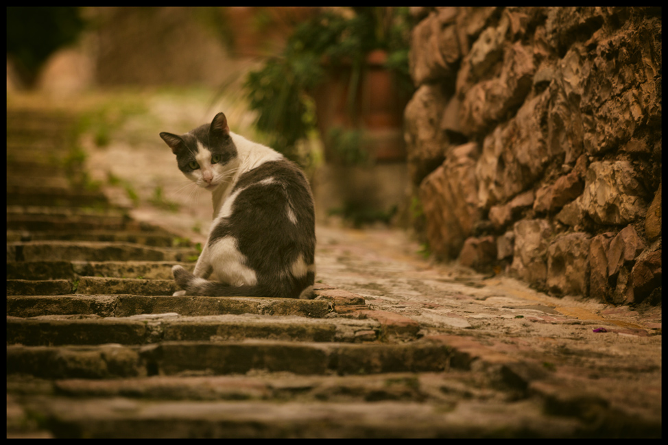 Spello Kitty