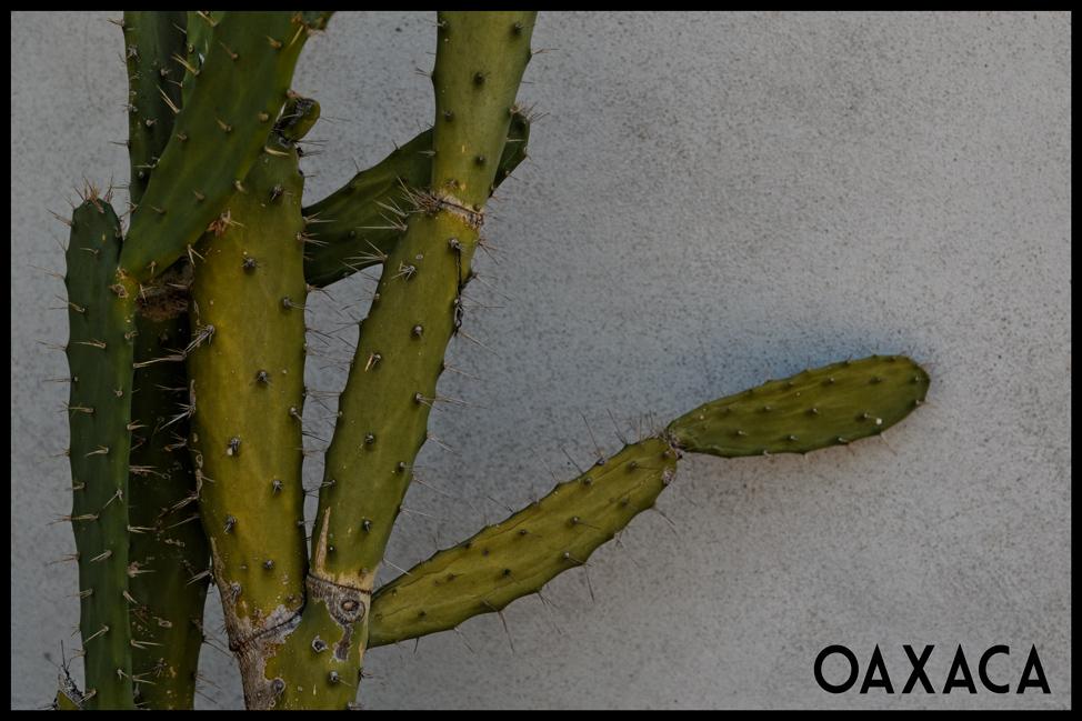 Oaxaca-Cactus-Postcard