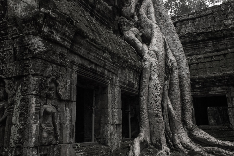 The Famous Tree of Ta Prohm