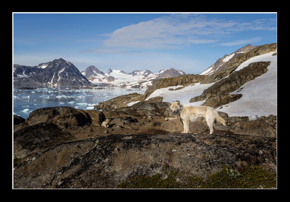 Work Dogs Greenland