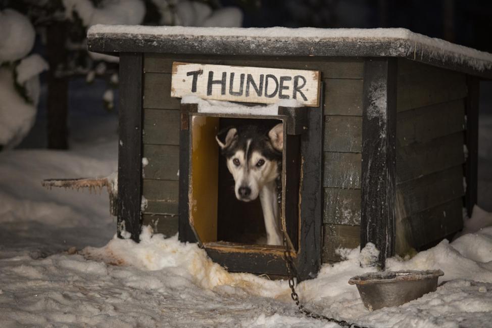 Hetta Huskies Thunder