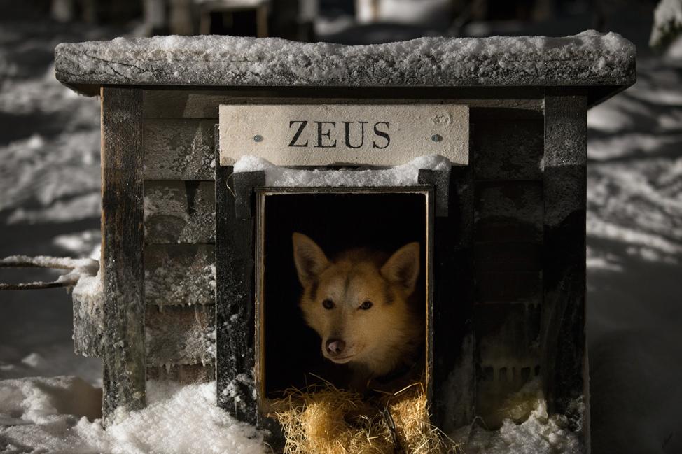 Hetta Huskies Zeus
