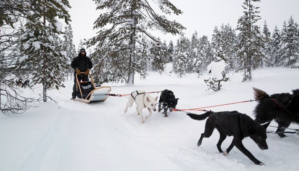 Dog Sledding, as Intended thumbnail